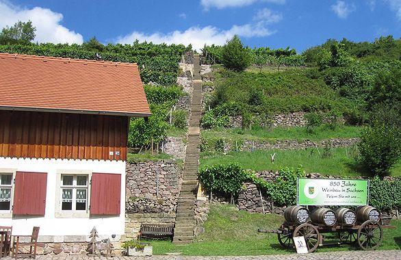 Weinbau Fehrmann in Dresden