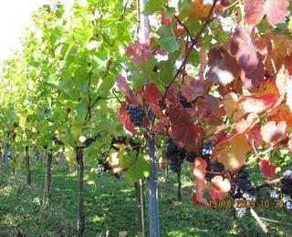 Weingalerie von Weinbau Fehrmann