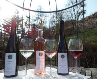 Die neuen Weine von 2014