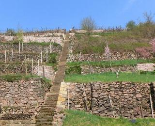 Sommer beim Weingut Fehrmann