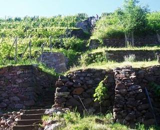 Anwesen und Auszeichnungen von Weinbau Fehrmann